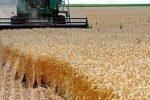 مدیرکل غله و خدمات بازرگانی استان : پرداخت ۹۸ درصد از مطالبات کشاورزان گندمکار خوزستانی