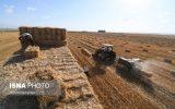 آمادگی خرید محصول گندم در فصل برداشت خوزستان